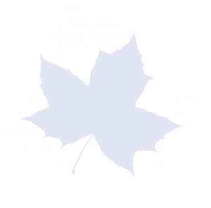 drawing of leaf